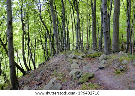 Rocky path in an old forest  - stock photo