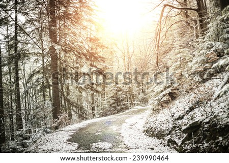 Rocky path in pine winter forest with sun rising up. - stock photo