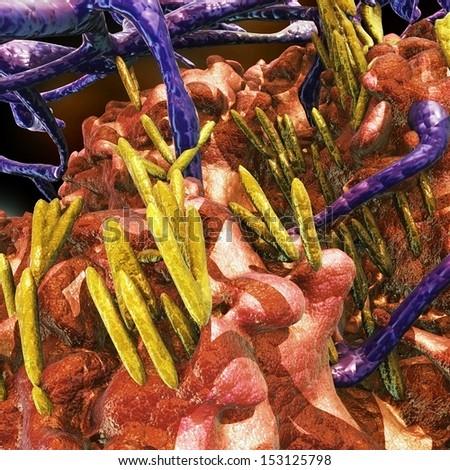 Rod Bacteria - stock photo