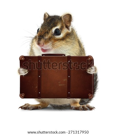 rodent with suitcase isolated on white, vacation concept - stock photo
