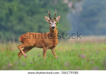 Roe deer with camouflage - stock photo