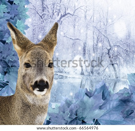 roe - doe , red deer - winter time - stock photo