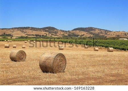 Rolled bales of hay and a vineyard near Tanunda in the Barossa Valley, South Australia. - stock photo