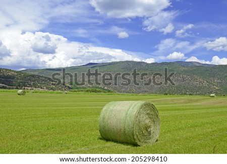 Rolled hay on Farm, Rural Landscape - stock photo