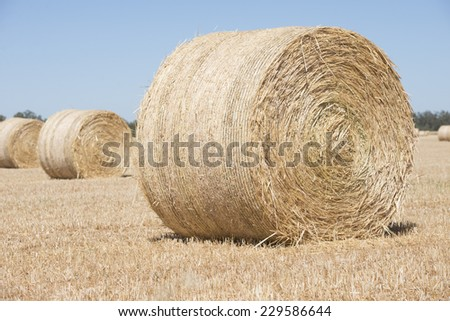 Rolled up hay bales on wheat field or dry meadow after harvest in remote agricultural countryside farmland, blurred background and copy space. - stock photo