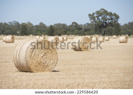 Rolled up hay bales on wheat field or dry meadow after harvest in rural agricultural countryside farmland, blurred background and copy space. - stock photo