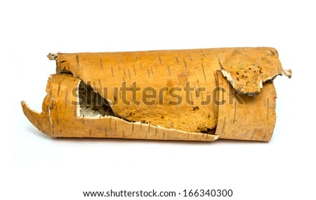 rolled up in roll birch's bark on white background