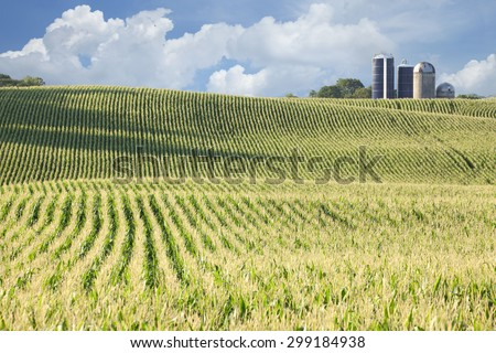 Rolling field of corn with siloes, blue sky and clouds in the background