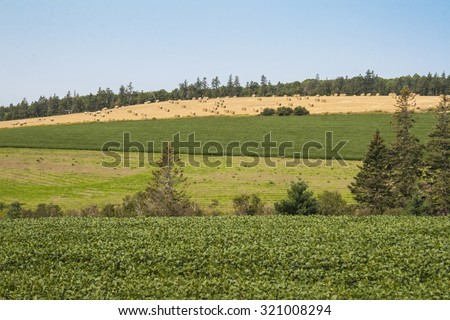 Rolling fields with soy growing in the foreground. Prince Edward Island, Canada. - stock photo
