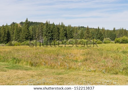 Rolling forested hills near Maple Creek, Saskatchewan, Canada