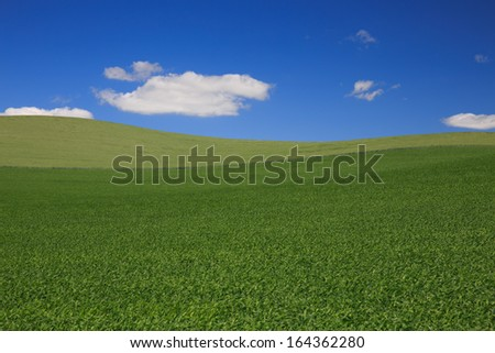 Rolling Green Meadow With Blue Sky and Clouds Background - stock photo