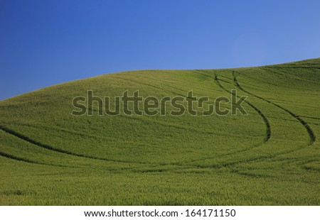 Rolling Green Wheat Fields With Blue Sky - stock photo