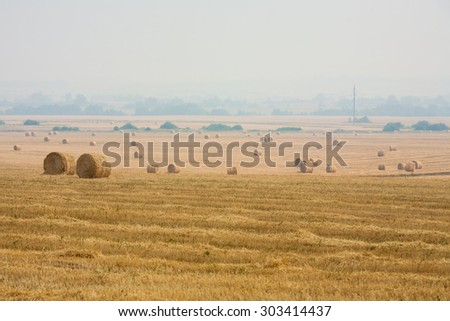 Rolling haystack. Field with hay bales. Rural scene.