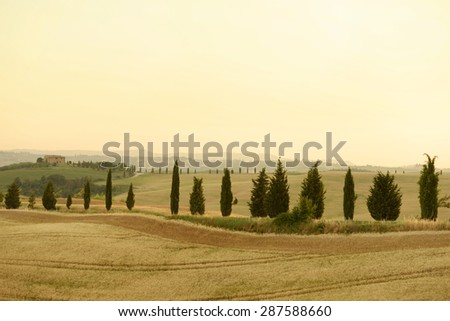 Rolling hills with tall cypresses in summer. Pienza, Tuscany, Italy
