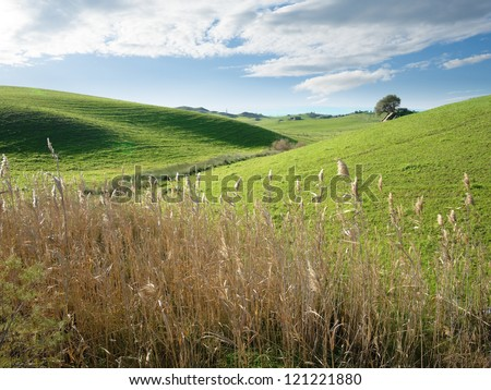 rolling landscape of sicilian country with lonely tree on background and rushes in foreground - stock photo