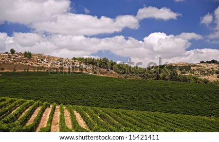rolling vineyards in the Galilee Israel - stock photo