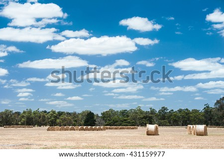 rolls of hay in dry field under blue sky with fluffy white clouds