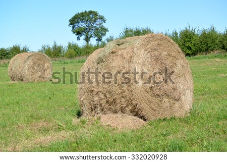 Rolls of hay lie on a green meadow. Summer - stock photo
