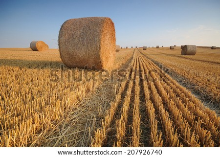 Rolls of hay on the field after harvest  - stock photo