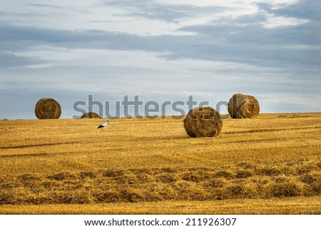 Rolls of hay on the field after harvest end stork