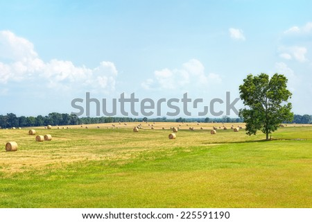 Rolls of summer hay in a large field with a single tree standing near by.