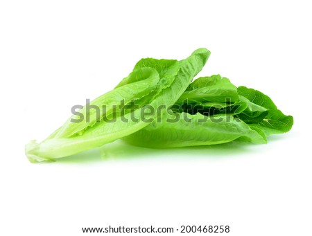 Romaine lettuce from low perspective isolated on white.