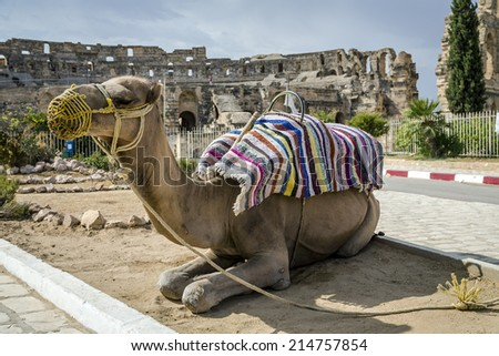 Roman amphitheater of El-Jam, colosseum, Tunisia, with closeup of dromedary - stock photo