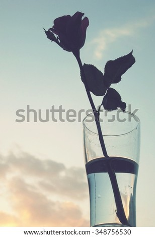romance concepts with Red rose in glass on sky background