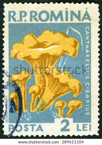 ROMANIA - CIRCA 1958: A stamp printed in Romania shows cantharellus cibarius golden chanterelle, fungus, series Mushrooms, circa 1958 - stock photo