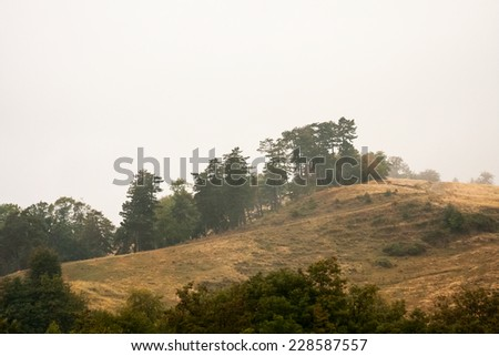 Romanian mountain landscape with trees and fog