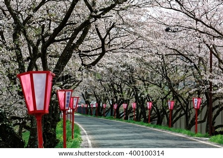 Romantic archway of pink cherry tree blossoms ( Sakura Namiki ) and traditional Japanese style lamp posts along a country road In Maniwa City, Okayama, Japan ( blurred background effect ) - stock photo