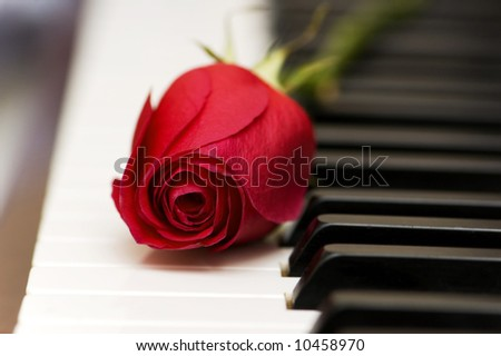 Romantic concept - red rose on piano keys - stock photo