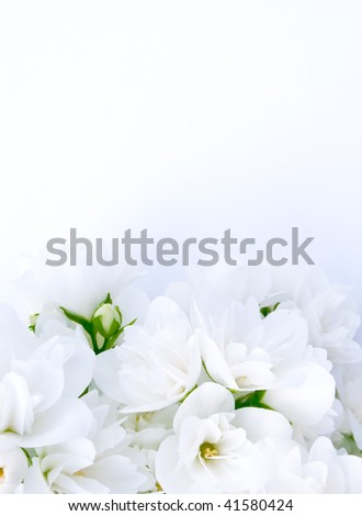 Romantic Jasmine Background With Space For Your Text or Images - stock photo