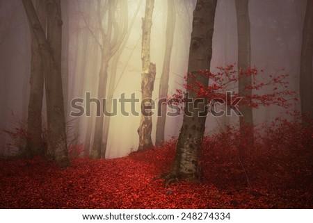 Romantic misty forest - stock photo
