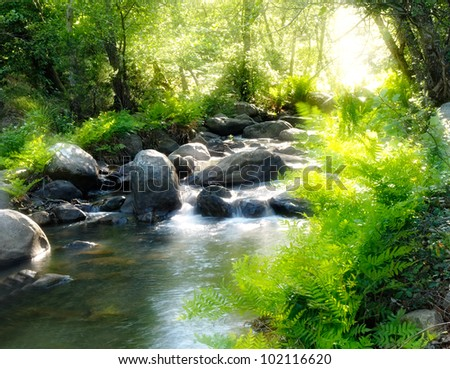 Romantic Mountain stream in a forest - stock photo