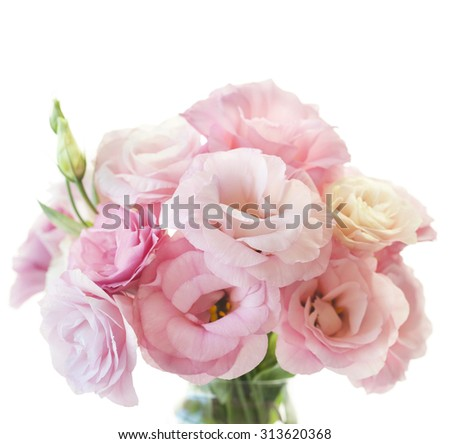 Romantic pink rose with fresh green leaves bunch isolated on white - stock photo