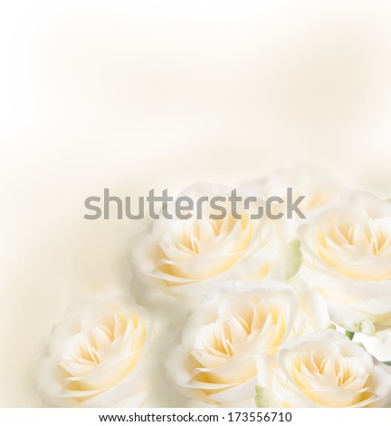 Romantic roses bouquet with free space for text, isolated on white background  - stock photo