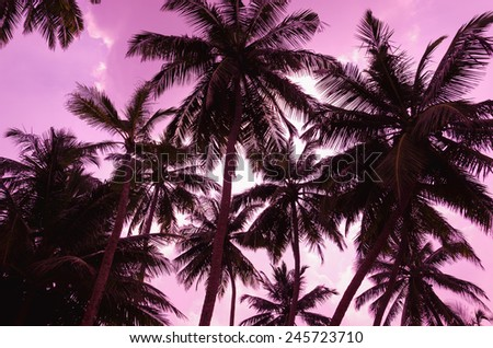 Romantic sunset on exotic beach full of tall palm tree  - stock photo