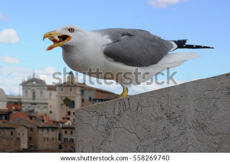 ROME, ITALY - MAY 1, 2014: Seagull catches a piece of bread against the background of the sky and the city on the Capitoline Hill