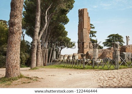 Rome - ruins of palatine hill and pine - stock photo