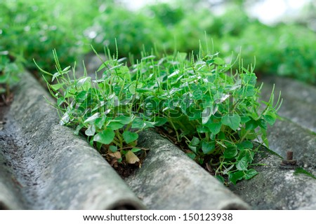 Roof Garden. Natural plants grown on roof top of a building. go green - stock photo