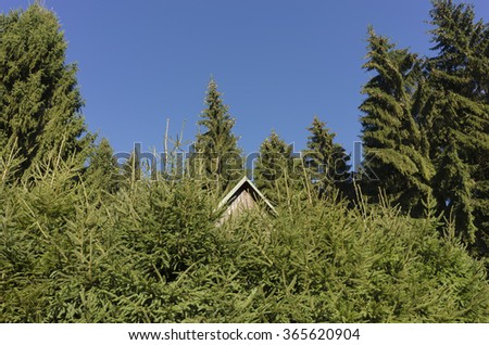 roof of a cabin hidden in trees - stock photo