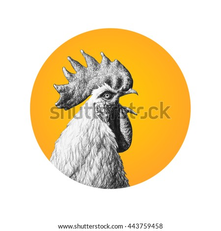 Rooster in the orange circle isolated on white background. Pencil illustration.