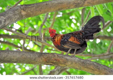 Rooster on the tree - stock photo