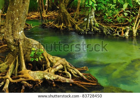 Root of water plant - stock photo
