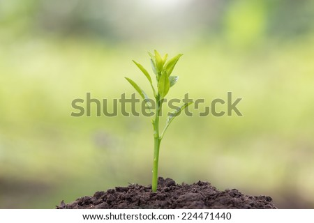 root young plant and light in the morning - stock photo