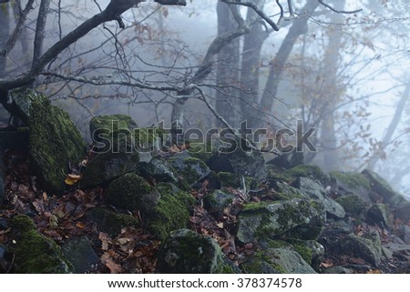 Roots of a tree and stones with moss in a misty forest in the evening. wilderness scene with moss covered rocks - stock photo