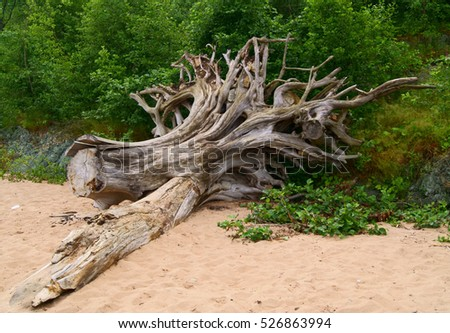 roots of a tree on the beach