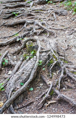 roots of alpine plants in the picturesque mountains of the Crimea