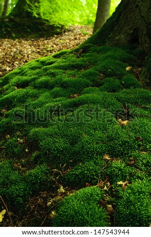 Roots of old mossy beech tree - stock photo
